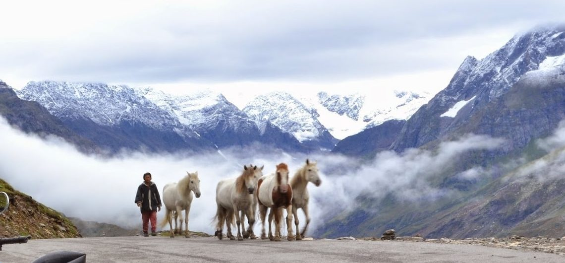 Horse riding at rohtang pass